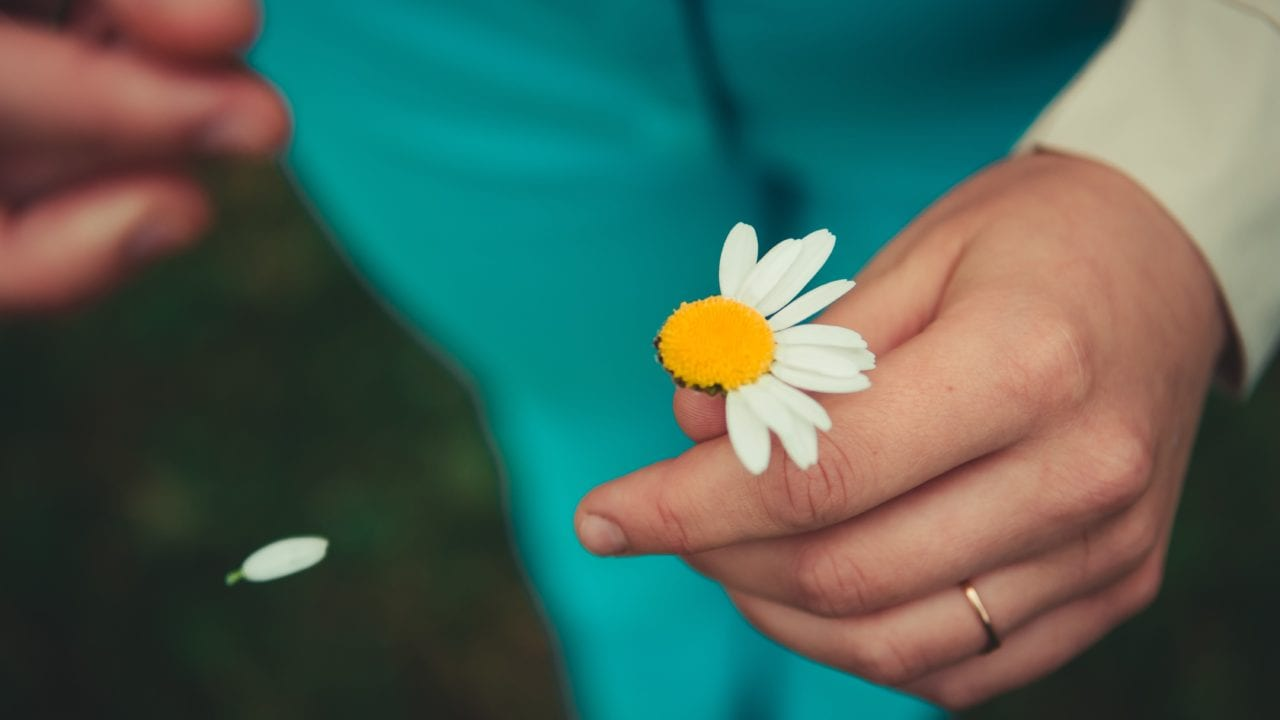 Image taken from above of a woman holding a white daisy in one hand and dropping petal from another